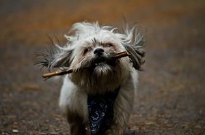 Kutyatáp