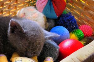 A macska játékok jól szórakoztatják a kedvenceket