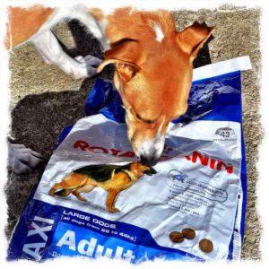 5e5afe20e1 A Royal Canin kutyatáp kiemelkedő ár-érték aránya